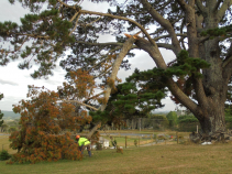 Storm damage and restorative pruning