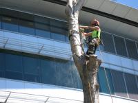 tree_dismantling.jpg